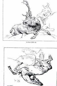 Edwin Landseer RESTING STAG Dead Deer Hind 1870 Antique Print Matted