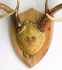 Rustic Beech Ultimate Antler Mounting Kit for Deer - The Taxidermists' Woodshop