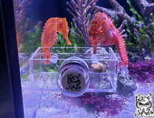 Seahorse Feeding Trough Aquarium Fish Tank Saltwater Freshwater Free Ship!
