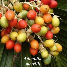 Christmas Palm Tree Adonidia merrilli 100 LIVE SEEDS TROPICAL Dwarf Royal Palm