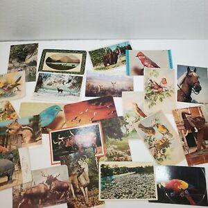 24 Animal Postcards Vtg Lot Variety Birds Elephants Sheep Buffalo