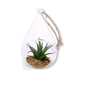 ARTIFICIAL SUCCULENT PLANT IN GLASS TEARDROP WITH ROPE TO HANG Brand New & Boxed
