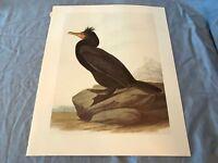 John James Audubon Bookplate Plate 166 Bird Art Print 1966 CORMORANT