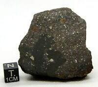 METEORITE NWA 13313 L3-6 BRECCIA CHONDRITE METEORITE OFFICIALLY CLASSIFIED