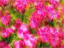"""8 x 10 Silver Metallic Art Photograph """"Abstract Red Tulips"""" Wall Decor Picture"""