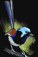 © ART -  Ltd.Ed. BIRD Variegated Fairy Wren ACEO Artist collector card by Di