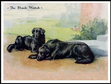 Flat Coated Retriever Two Dogs The Black Watch Lovely Dog Print Poster