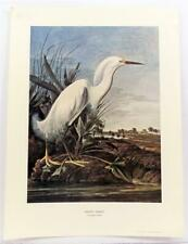 John James Audubon Natural Historical Print Snowy Erget LITHOGRAPH Realism #Z16