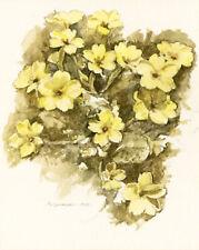Primrose Flower GREETINGS CARD Easter Steve Greaves Painting Art Card Botany