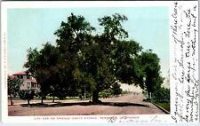 PASADENA, CA California   OAK in Middle of ORANGE GROVE AVE   1906 Street Scene