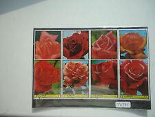 Ajman Flowers (2x Strips 4) CTO