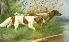 Rare Old Postcard Irish Red & White + Llewellin Setter Dogs Germany c1910