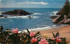 Northern California Blue Pacific Surf CA Rhododendrons Postcard