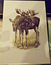 N°157 Mammal Poster Elk, Norway, Finland Sweden Lake Baikal