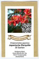 Chaenomeles japonica - Japanische Zierquitte -  essbar - winterhart(30 Samen)