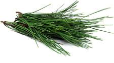 Fresh Wild Harvest  Pine Tree Needle Tea Loose leaves 12 ounces