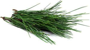 Fresh Wild Harvest  Pine Needle Tea  5 ounces ANTIDOTE SPIKE PROTEIN CONTAGION