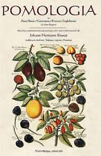 Pomologia: Nei Paesi Bassi / Germania / Francia / Inghilterra Ed by Hermann Knoo