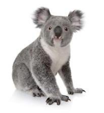 Pegatina adesivi adhesivo sticker coccion autoadhesiva habitacion koala ref2