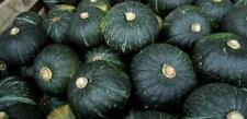 Pumpkin BUTTERCUP-Pumpkin Seeds-BRILLIANT FAMILY VARIETY-20 FRESH SEEDS.