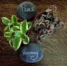 Crassula Sarmentosa 'Variegated' & Crassula Sar. Pellucida 'Var.' 2 Plant Combo