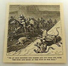 small 1879 magazine engraving ~ Lion Hunt ~ hunters shoot at lions