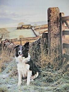 UP NORTH STEVEN TOWNSEND PAINTING SHEEPDOGS WATER COLOUR SIGNED PRINT 649/675