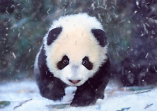 BABY PANDA - 3D Lenticular Postcard Greeting Card- Wildlife -