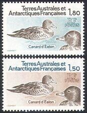 FSAT/TAAF 1980 Pintails/Ducks/Birds/Nature/Wildlife 2v set (n22743)