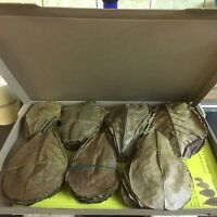 100 Stück Seemandelbaumblätter 10-15cm (ca. 100 Gramm) Terminalia Catappa Leaves