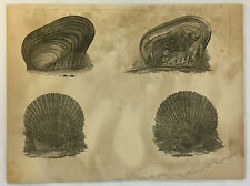 1856 Woodcut US Japan Expedition CONCHOLOGY Plate III Conch Shells