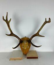 Altes Großes Hirschgeweih Rentier Knochen Vintage Antlers Deer Horns Bone Gelb