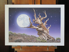 Bristlecone Pine Cradles the Moon Art Print 13x19 inch signed and numbered