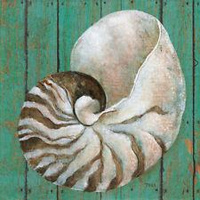 Tava Studios: Nautilus Fertig-Bild 30x30 Muschel Meerestiere Strand grün maritim