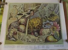 Ancien jeu de l'oie le panier de fruit réédition identique   67 x 54 cm