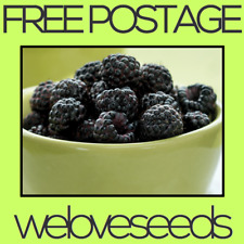 LOCAL AUSSIE STOCK - Black Raspberry, Fruit Tree Plant Seeds ~10x FREE SHIPPING