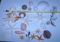 Mixed Rare Starfish, Coral, Dried Sea life Shells Craft collector Decor Lot 27-L
