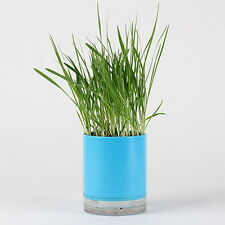 Oat Seed Cat Grass Growing Complete Kit Healthy Pot
