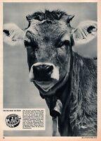 1959 CAMEMBERT Jersey Cow BAER CHEESE  AVANTI BILDER BONS