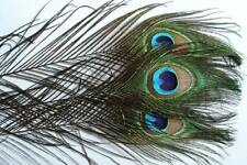 3 x Oeil de PAON montage mouche fly tying peacock pavo Pfau herl truite naturel