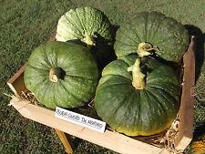 Pumpkin BUEN GUSTO De HORNO-Pumpkin Seeds-SPANISH FAVOURITE-20 GIANT SEEDS