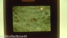 EKTA - 050717 - Parc national des Abruzzes - Italie - Ours brun Marsicain