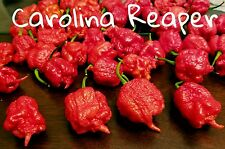(25+) Carolina Reaper #1 hottest Pepper Seeds