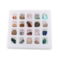 Natural Fossil and Minerals Collection Kit Pack of 20