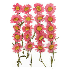 pressed flowers, pink daisy 20pcs for floral art craft card making, scrapbooking