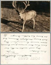 DEER 1930 ANTIQUE REAL PHOTO POSTCARD RPPC