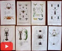 Insects sea-life crustacea bugs c. 1840-50 lot x 8 engraved hand color prints