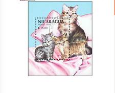 BLK00344 Nicaragua cats block