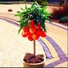 Sweet Peach Autumn Plants Red Tree Fruit Garden Home Pots Flowers 10 PCS Seeds G
