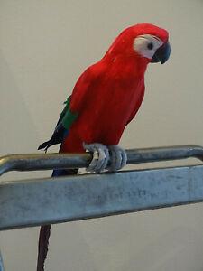 Ara Deko Papagei Vogel Amazone Dekoration  rot / blau 46 cm